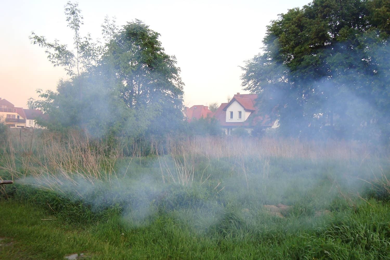 zwalczanie-komarow-img (4)
